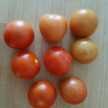 Die letzten Tomaten, bevor es kalt wurde